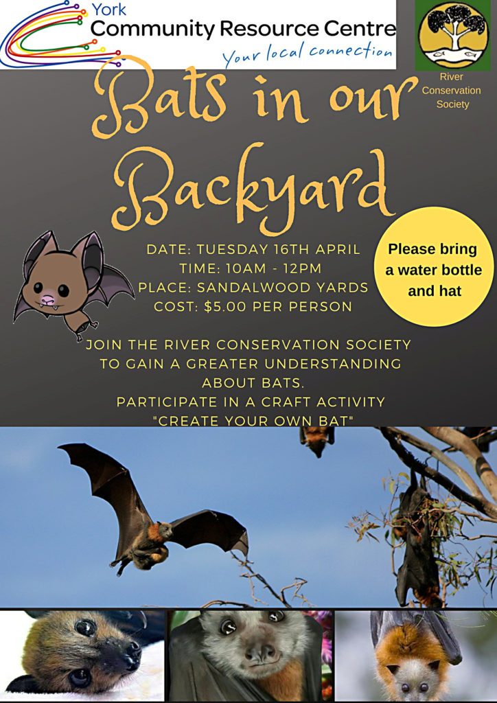 Poster: Bats in our backyard poster.