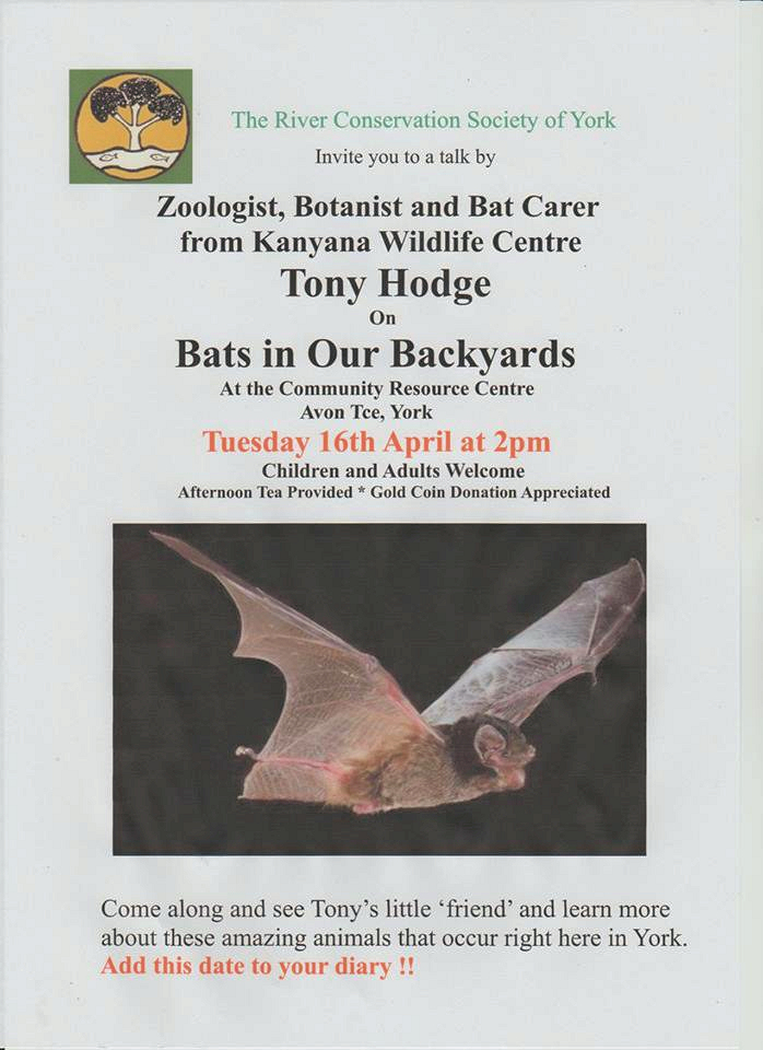 Poster: Bats in our back yard poster.