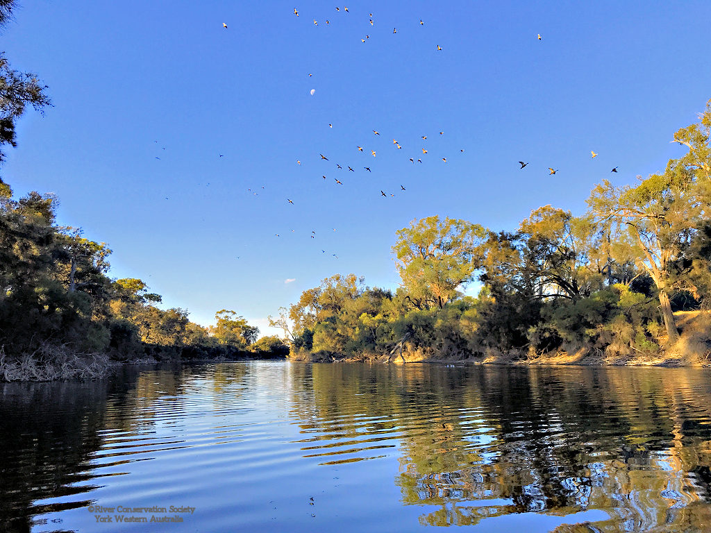 Gwambygine Pool, river pool, tree lined banks, water birds flying