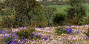 Photo: colourful wildflowers on top of Mt Bakewell