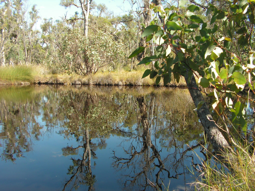 Photo: Pool of water surrounded by bushland at Dell Reserve